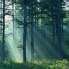 Спасём лес в Нахабино