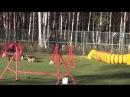 Гоманюк Анна с метисом Джесси и шелти Лесей на соревнованиях по аджилити 18.10.14