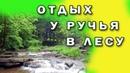 ♫ Отдых у ручья в лесу. Пение птиц и полный релакс♫