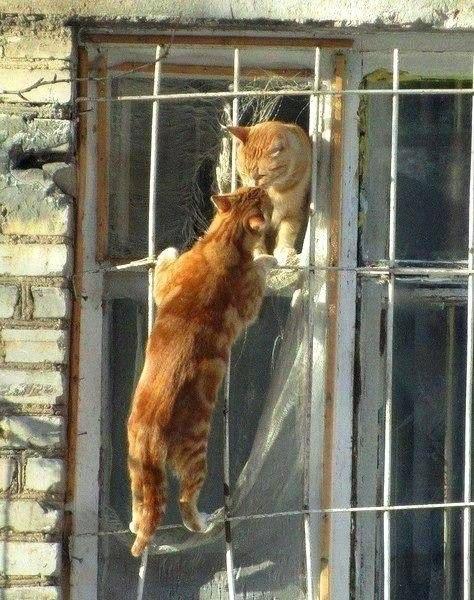 Для любви не существует границ!