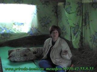 Чудесный отдых у Колотовой Марины на сеновале до 30 августа (увы, внуку в школу пора).
