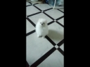 Венди учится танцевать!😂