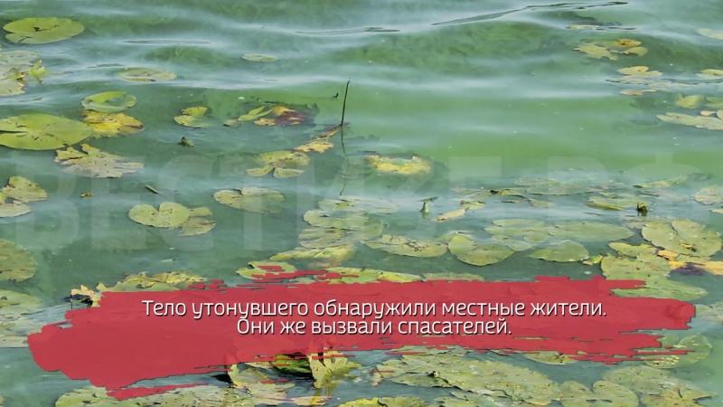 Тело мужчины обнаружено в пруду под Вологдой