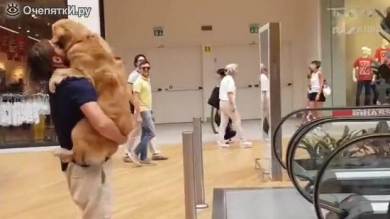 Пёс боится эскалатора