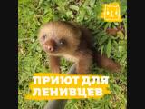 Рай для ленивцев