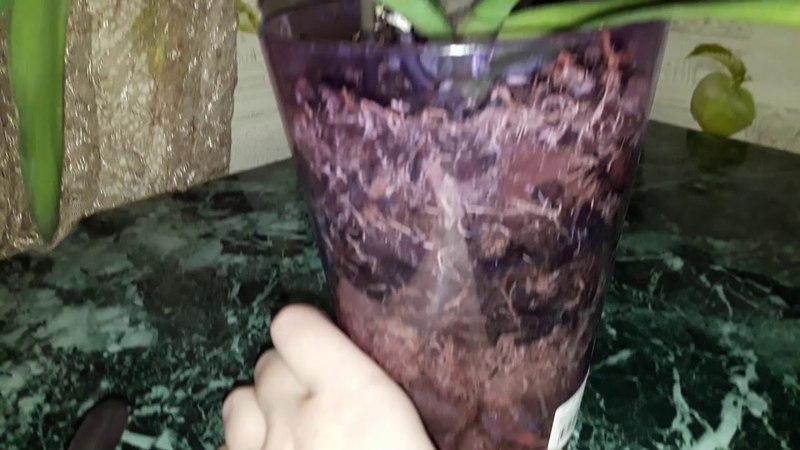 Орхидеи Отделила детку орхидеи у многодетной мамы Подарок Катюши