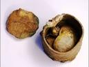 Найден клад, Золотые монеты Византии, 2018, Found treasure, Byzantium Gold Coins