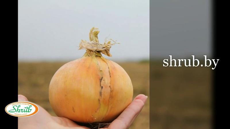 Хранение овощей. Крестьянское хозяйство Михаила Шруба