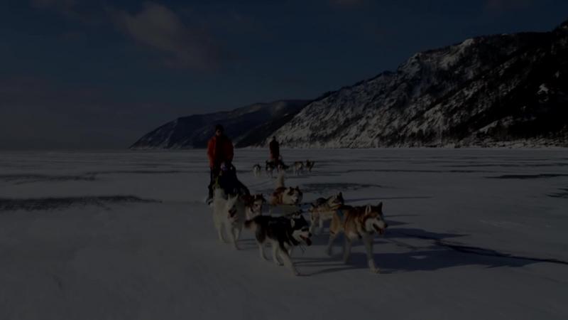 Собачьи упряжки Иркутск