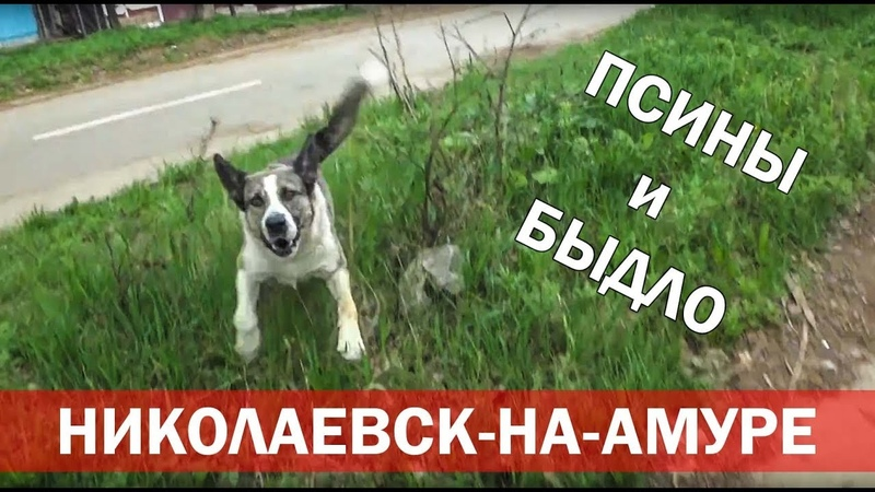 Псины и быдло (кепку снесу) [Николаевск-на-Амуре]