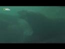 Южные моря. битва за жизнь 1080i