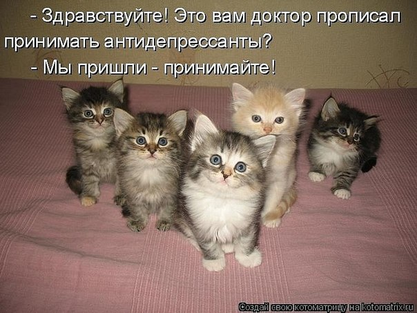 http://cs407221.vk.me/v407221102/481d/UV498C6XGbc.jpg