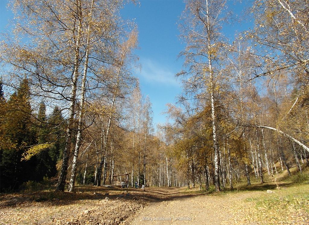 Медеу Бутаковка Березовый лес