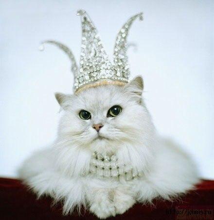 классные картинки котов:
