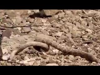 Тихо змейка, не шипи