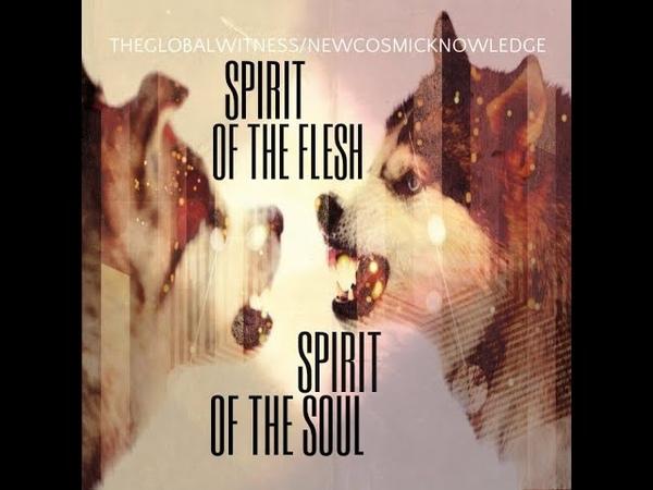 Global Witness Spirit of the Flesh Spirit of the Soul