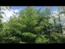 в доме в саду которого рос бамбук