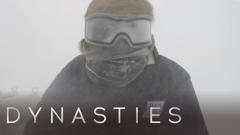 The Dynasties Crew Endures an Antarctic Storm   Dynasties: Behind The Scenes   Earth Unplugged