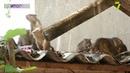 В Одессе из-за нашествия крыс едва не пострадал ребенок