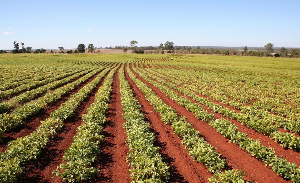 Бобовые помогают обогащать почву добавлением азота.