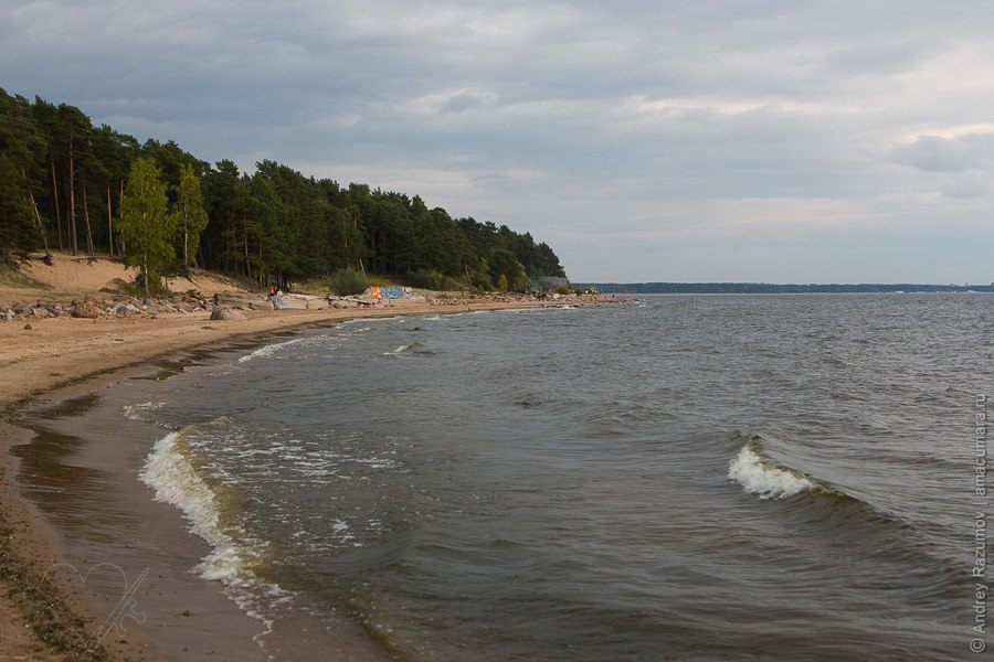 Репино Пенаты залив Финский берег