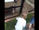 кормим курочек травкой