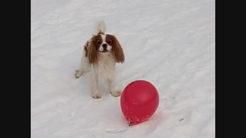 Тоффи и шарик