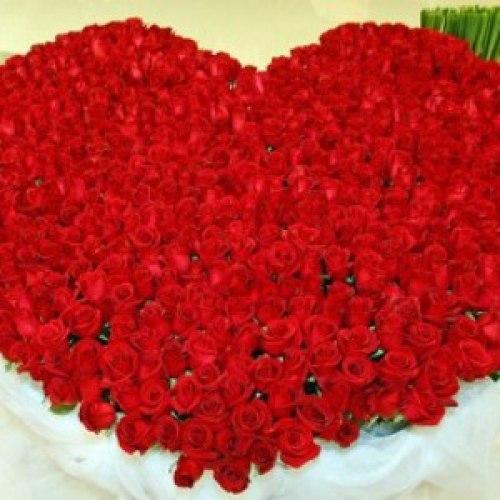 Утренняя роза нажмите на картинку