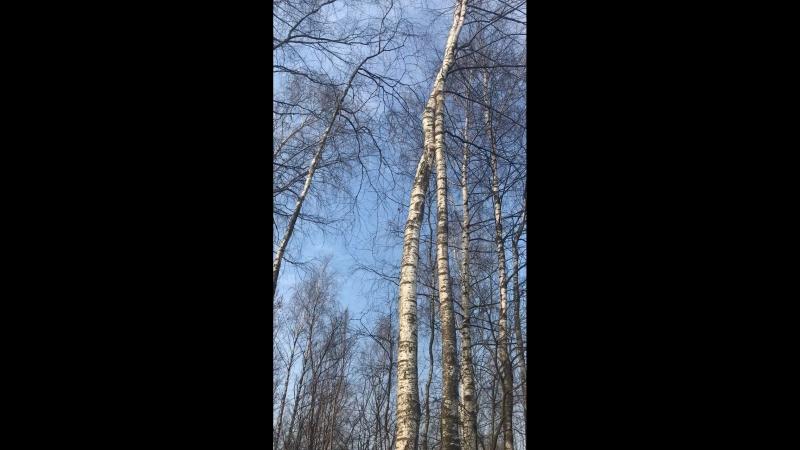 Пение птиц в нашей лесу