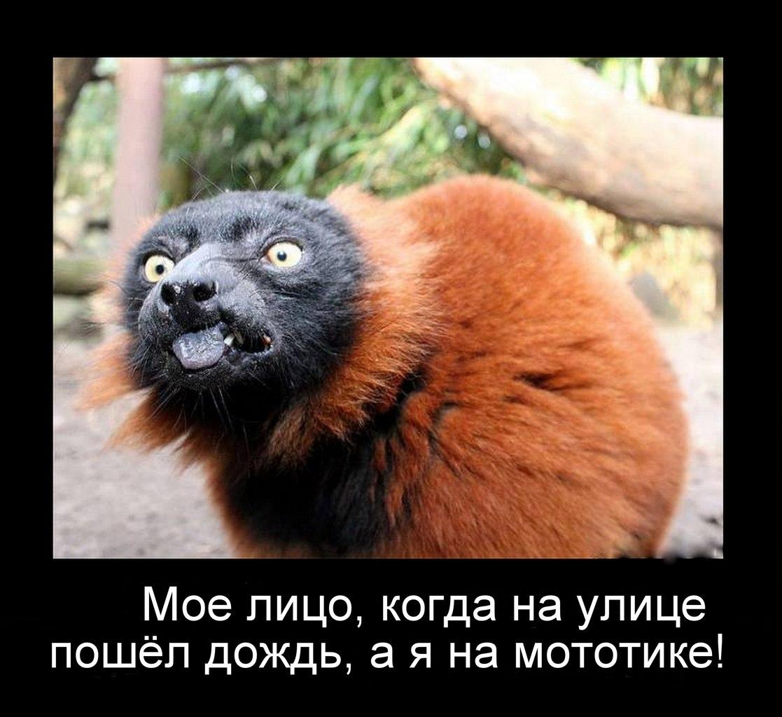 krasnaya-popa-u-obezyan