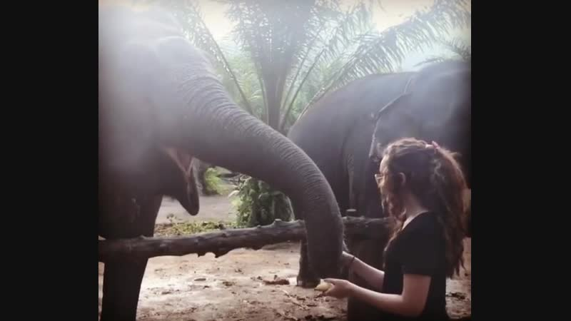 Sanctuary for retired and rescued elephants 😭♥️🐘 ———————————————————————— 🚫NO RIDING OR CRUELTY🚫