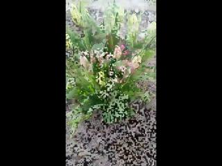 Родительский дом- самое дорогое сердцу место на земле💛 . . Безумная красота💛💛💛Мамин цветник)) Первые апрельские цветы) Это только маленькая часть всего масштаба, сложно сказать,сколько разновидностей цветов и кустарников у мамы))) . . С любовью к тому,что делаешь💛 #весна #апрель #первыецветы #родительскийдом #уют #дом #роднойдом #маминцветник 0:01 Авто 0:29