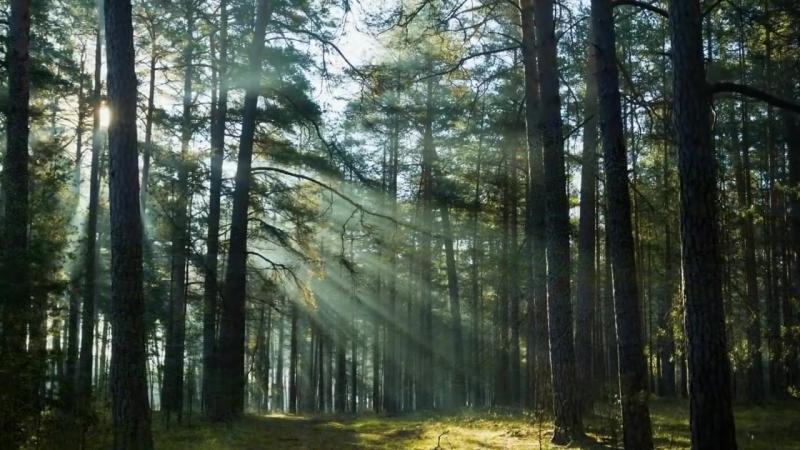 1.Послание играющего Духа. Часть 1. (Зеркало просветления. )ОШО