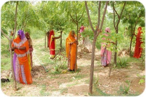 УДИВИТЕЛЬНАЯ ИНДИЯ: 111 плодовых деревьев для каждой новорождённой девочки