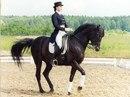 К числу Олимпийских видов конного спорта относятся выездка, конкур и троеборье.