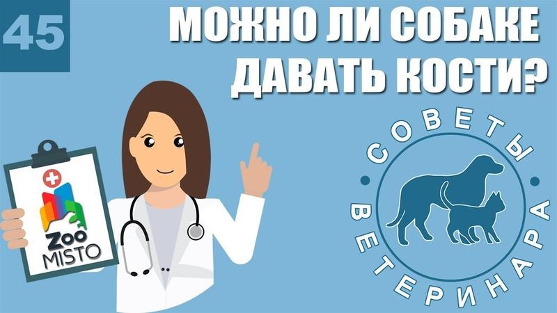 Можно ли собаке давать кости Советы ветеринара
