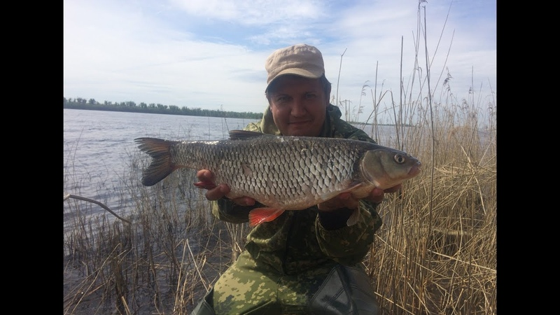 17 Клевая Рыбалка с Берега на Волге Ловля Голавля на Донку Закидушку