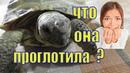 Черепаха съела инородное тело/ Я сильно испугалась