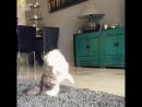 Прекрасный котёнок превратился в кота-красавца