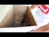 Как успокоить котят в коробке / How to calm kittens in a box )