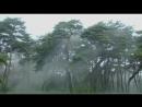 Корейское национальное дерево сосна