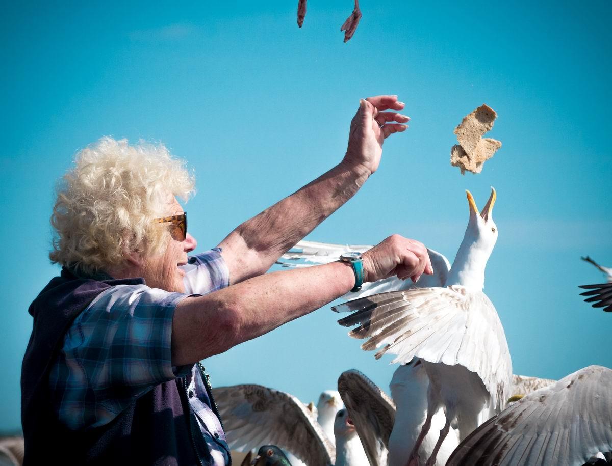 Кто не успел, тот опоздал: Прожорливые британские чайки