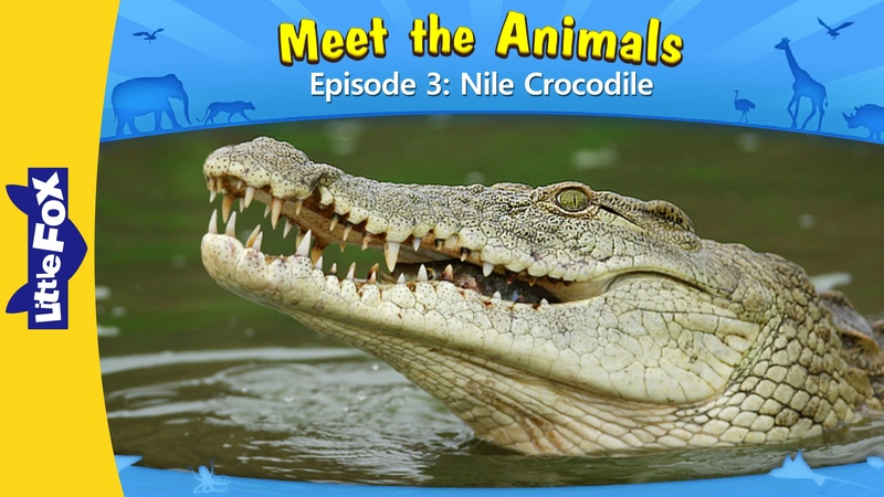 Meet the Animals 3 Nile Crocodile | Level 2 | By Little Fox