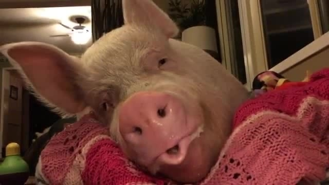 Happy NEW YEAR! - 2 ★ 1 9 - Happy PIG!