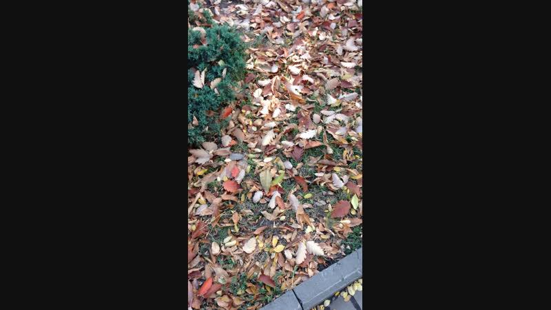 Матадор осень