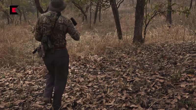 Охота в Камеруне ПОДЖИДАЕМ ЛЬВА У ПРИВАДЫ!
