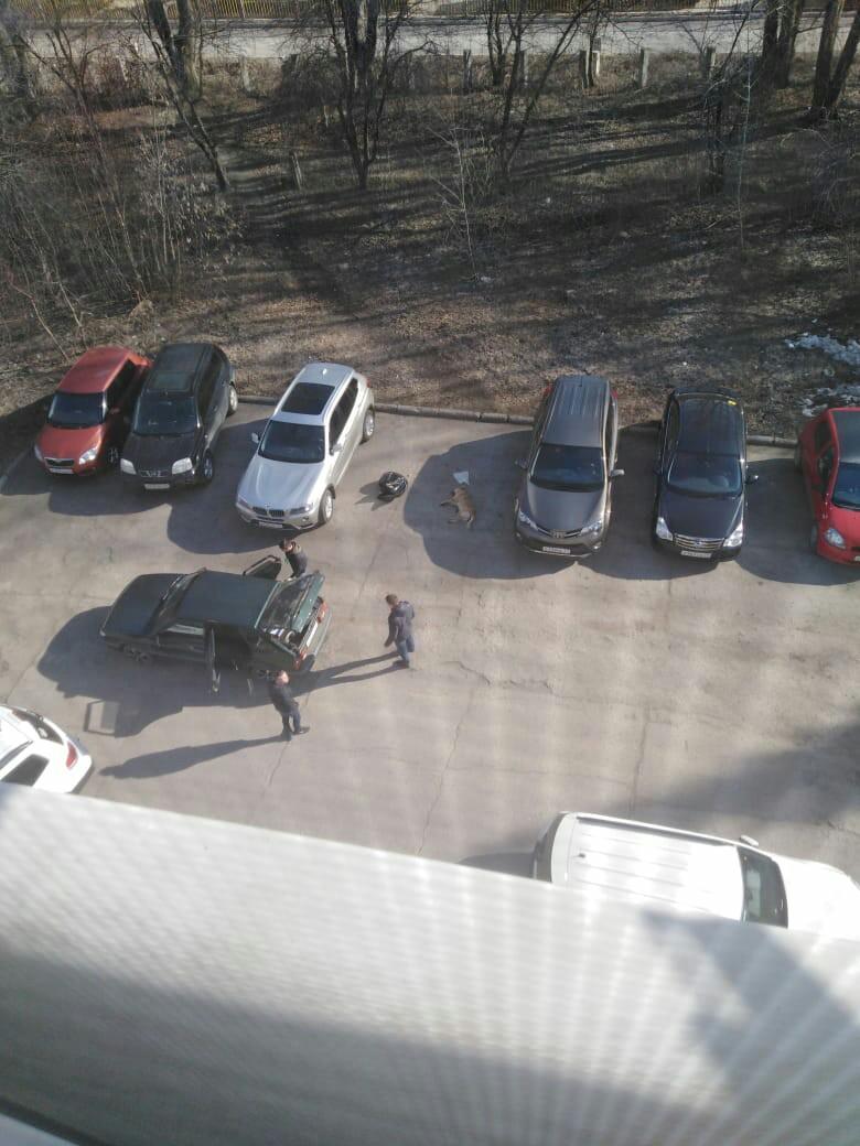 В г. Новочебоксарск по-прежнему убивают собак на месте отлова. 18 апреля 2019 года по адресу: г. Новочебоксарск, ул. Про