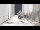 ЛЕТАЮЩИЙ КОТ! ИЛИ! КОШАЧИЙ ПАРКУР!FLYING CAT! Or! CAT PARKOUR!