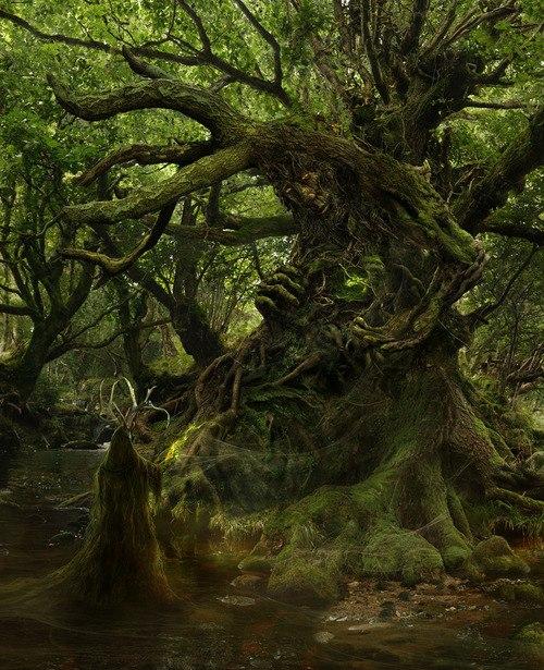 чернаямагия - Магия растений. Магические свойства растений. Обряды и ритуалы. Амулеты и талисманы из растений.  SAWY-wxyzw0