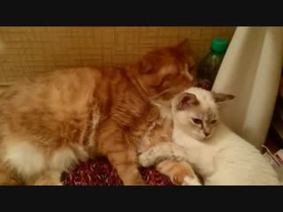 Софья и Тиша